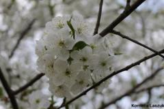 Wiosna w obiektywie młodego fotografa